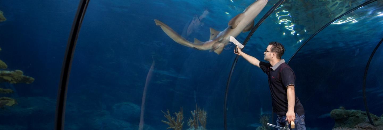 een schoonmaakmedewerker van Gom wast de ramen in het Oceanium van Blijdorp met een haai die net voorbij komt zwemmen